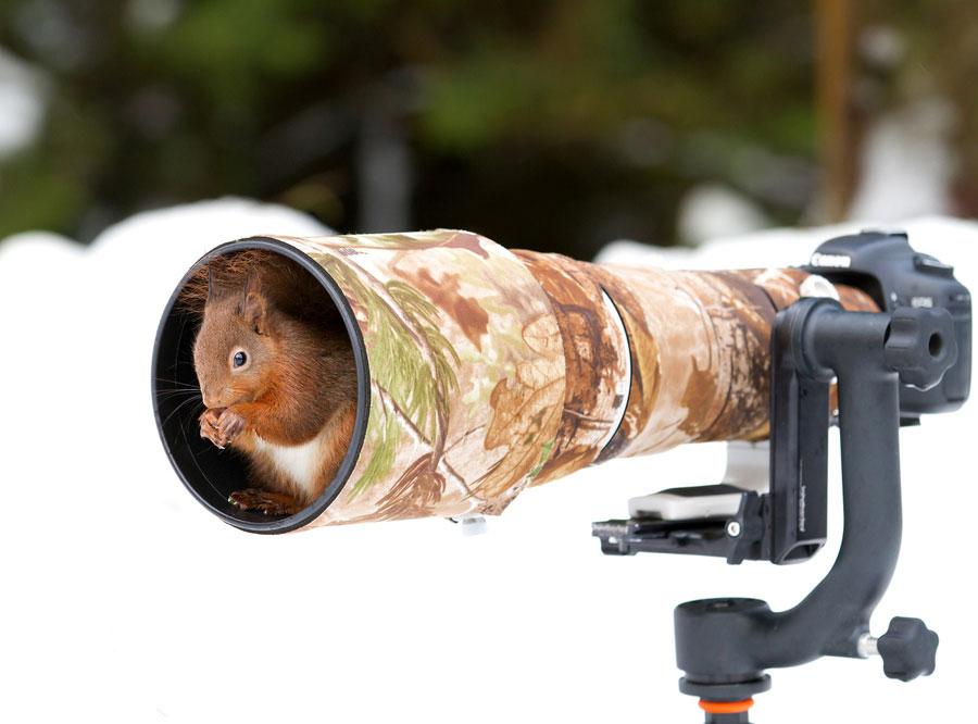 animaux-photo-le-boitier-photo